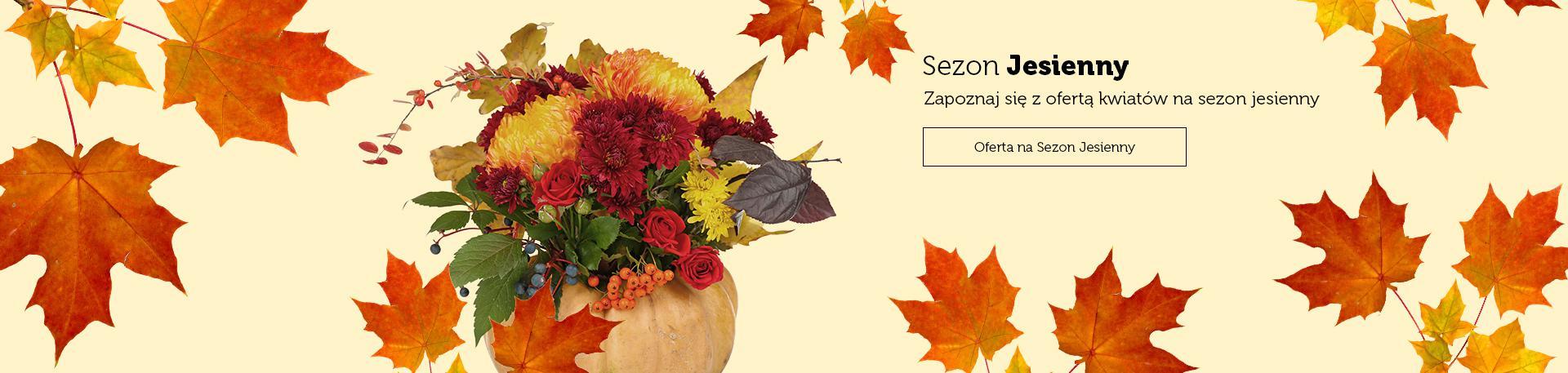 Oferta na Sezon Jesienny