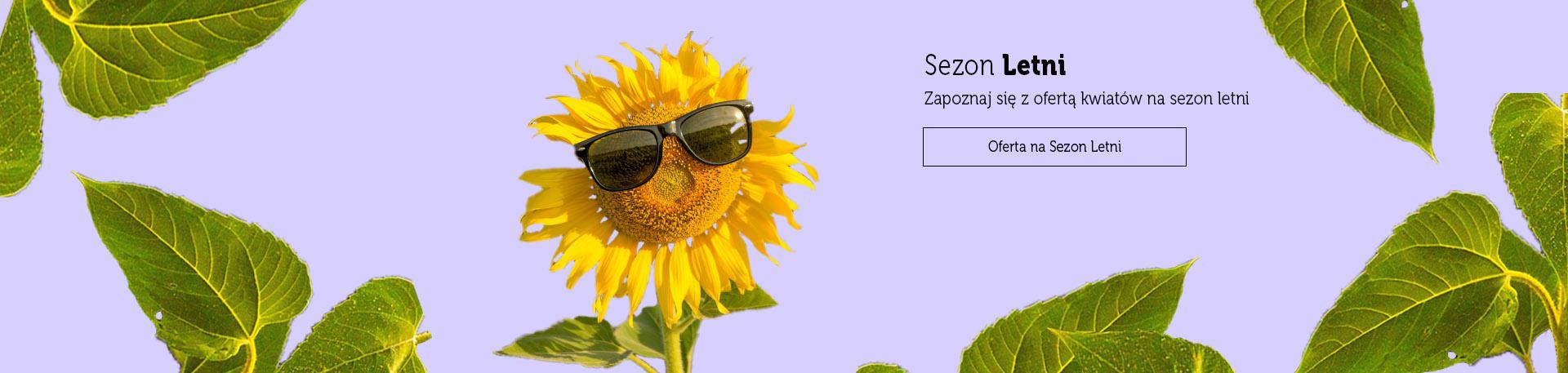Oferta na Sezon Letni