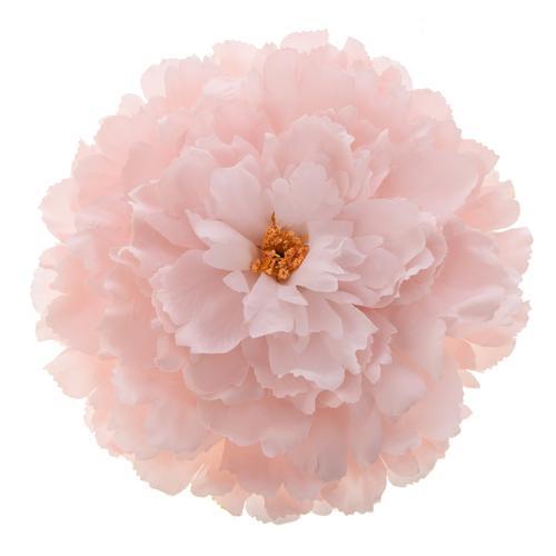 różowa główka kwiata dekoracyjna