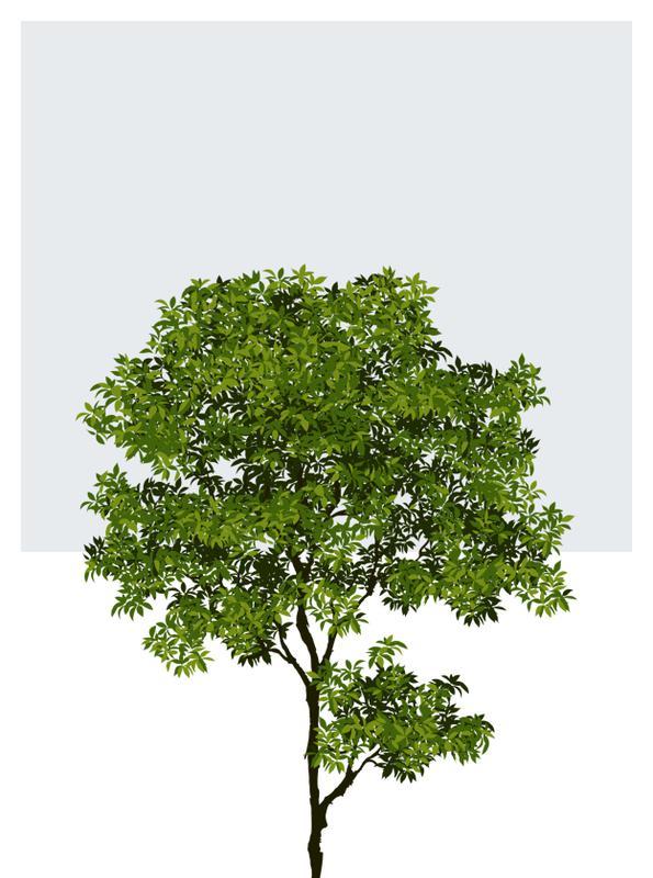 Drzewka ozdobne