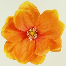 Magnolia - główka (W175)