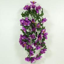 Storczyk - pnącze (B600)
