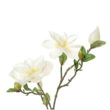 Magnolia - gałązka (GK123)