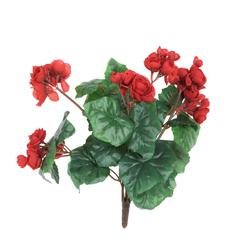 Begonia bukiet (B271)