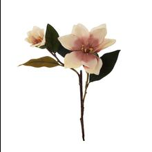 Magnolia - gałązka (GK424)