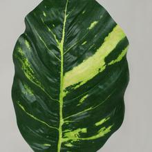 Pothos - liść (L920)