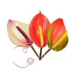 Anturium - gałązka kwiatowa z gumy (GK055)