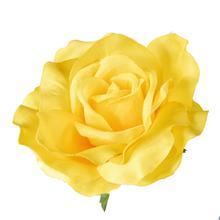 Róża rozwinięta - główka (W066)