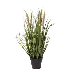 Kwitnąca trawa w doniczce 60cm (TR003)