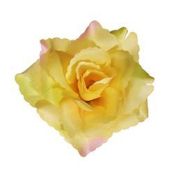 Róża Susanna -  główka (W686)
