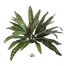 Kalatea - roślina zielona (D027)