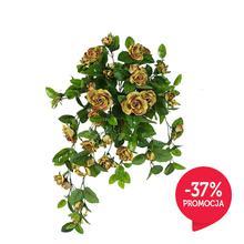 Róża - pnącze (B555)