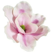 Magnolia - główka (W172)
