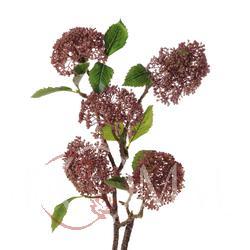 Gałązka z kulistym kwiatostanem (DK009)