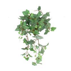 Winorośl - pnącze (B163)