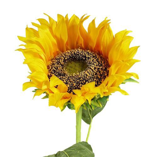 Sztuczny słonecznik