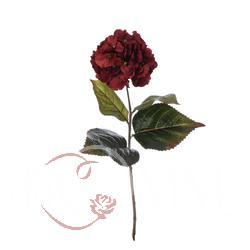 Hortensja - gałązka (GK475)