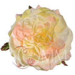 Róża peoniowa- główka (W007)
